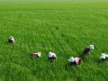 2020年国家65项强农惠农富农政策全面发布